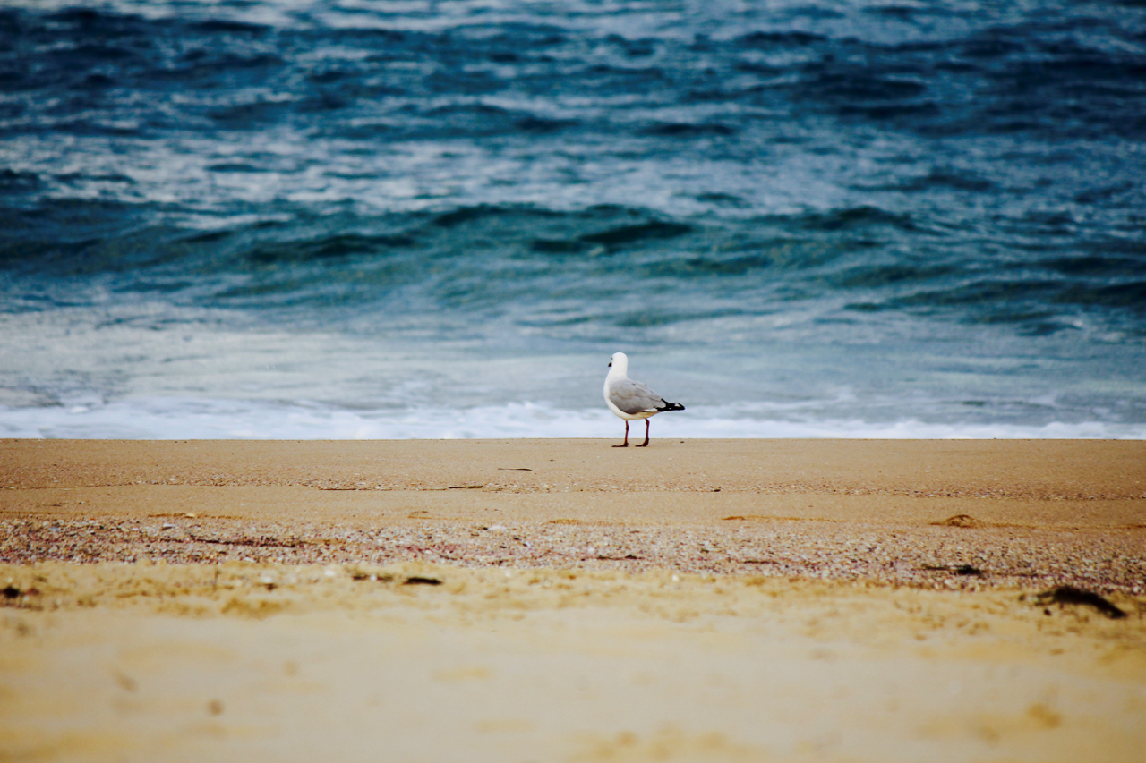 Beach Holiday: Seagull chilling on the beach
